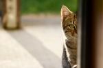 Photo of a wild kitten