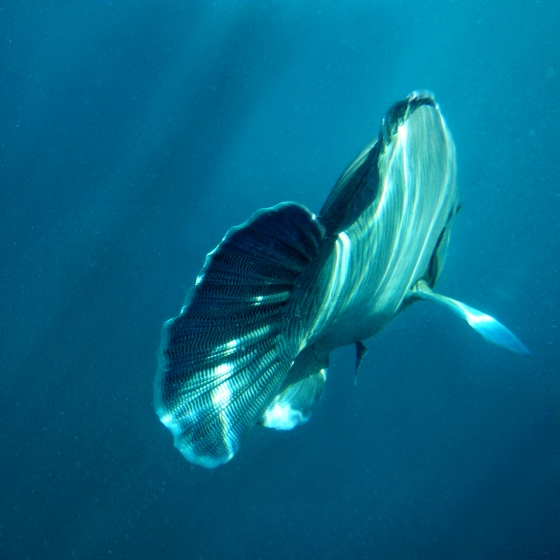 underwater photo of a fish swimming away