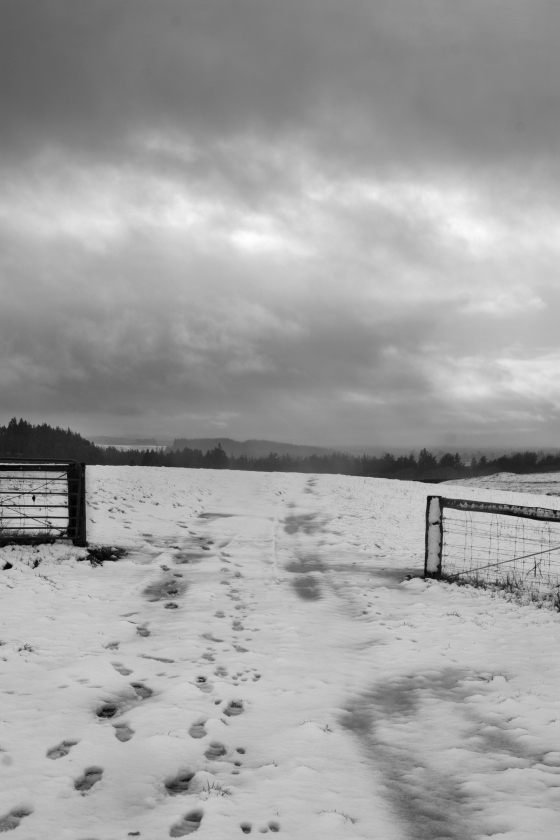 photo of snow covered ground with open gateway and moody sky