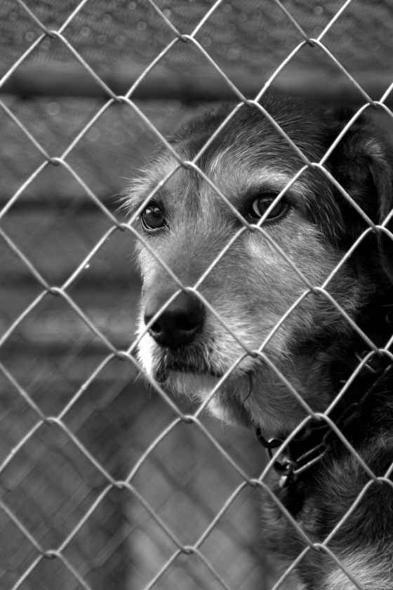 photo of a dog that was left behind in its kennel
