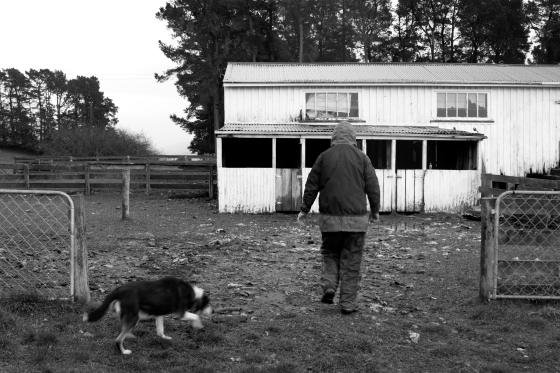 photo of a man and a dog walking towards a white shed